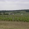 Vignoble de Bourgueil