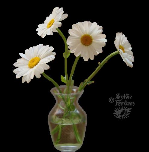 Tubes fleurs création 8