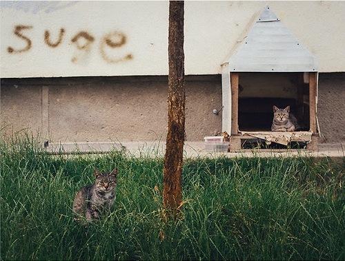 03 - Des chats à la fenêtre suite