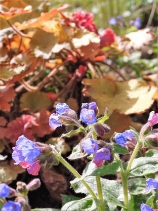 Avril et le jardin renaît!
