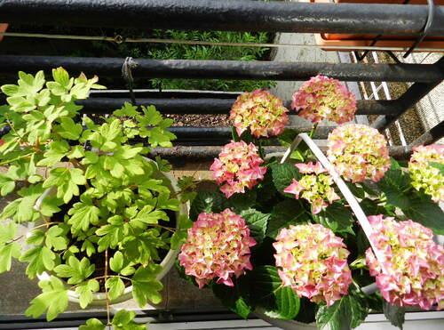 le végétal vu sur ma fenêtre...