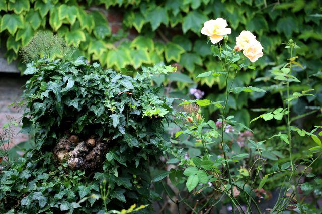 Le jardin comme exutoire (24)
