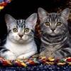 mimi-ces-petits-chats644872-l