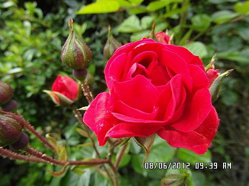 fleurs-du-8-Juin-004.JPG