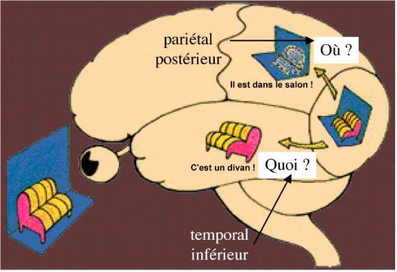 http://lancien.cowblog.fr/images/Cerveau1/3713885.jpg