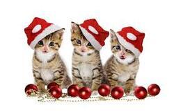 Cartes de Noël 1.