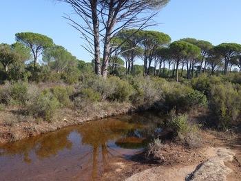 Vidauban, le Bois du Rouquan