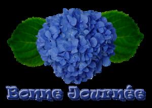 Tubes fleurs d'Hortensia