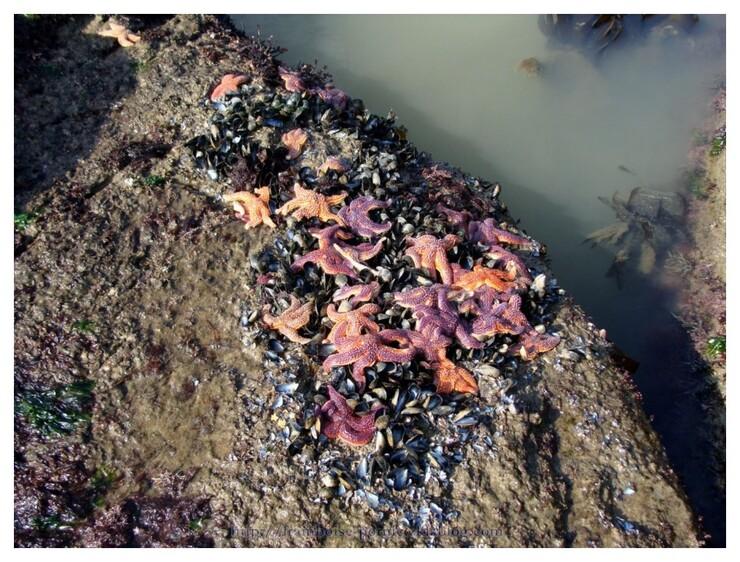 Sortie nature Le Monde secret des algues