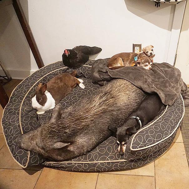 homme-adopte-senior-abris-chien-steve-greig-117