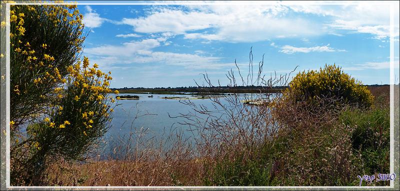 Balade dans les marais - Les Portes-en-Ré - Île de Ré - 17