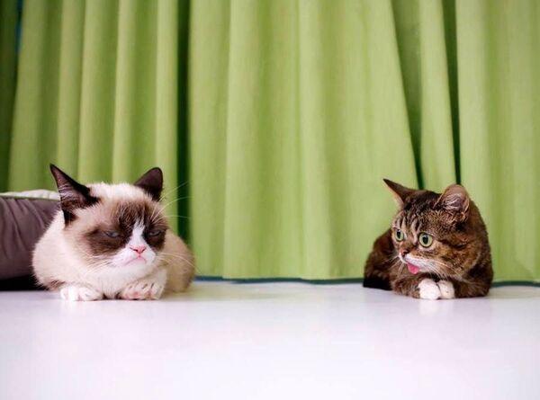 Quand Grumpy Cat, à gauche, célèbre pour sa moue, rencontre Lil Bub. © Adam Rifkin, Flickr, cc by 2.0