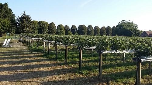 Après Fontainebleau un tour à Soignolles