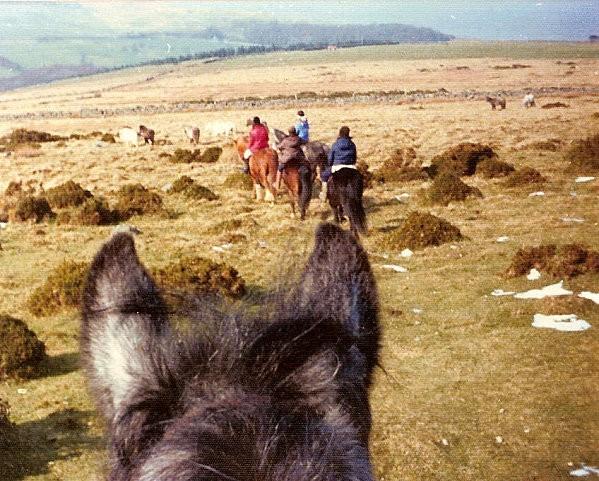 Sacré poney ! Pays de Galles début années 70