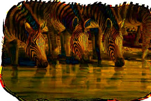 tube zèbres