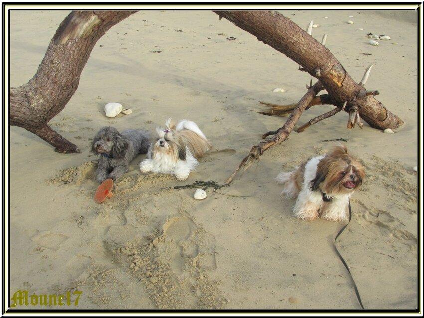Balade sur la plage de St Trojan (île d'Oléron)