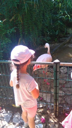 Sortie au parc aux oiseaux d'Upie
