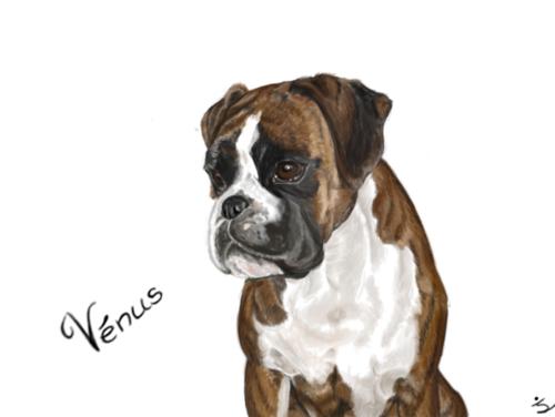 Portrait de mon chien