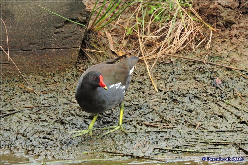 Réserve ornitho du Teich - Septembre 2015 - 6/6