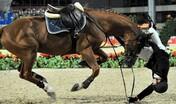 Expérience à cheval : Monte en Licol