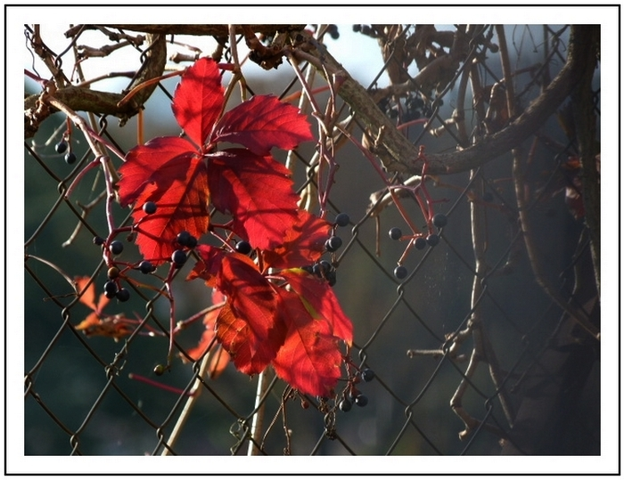 La nature se parait de couleurs