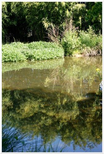 Arboretum de l'Ecole Du Breuil. Paris 12ème. Eau et reflets