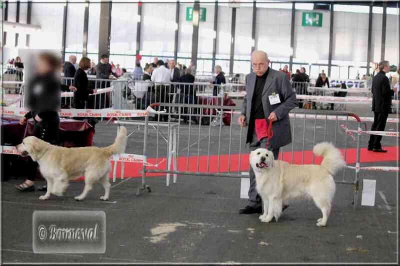Exposition canine Bordeaux CACIB, 16 janvier 2011