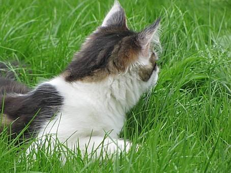 mes-animaux-de-compagnie-et-les-animaux-de-la-nature-7369.JPG