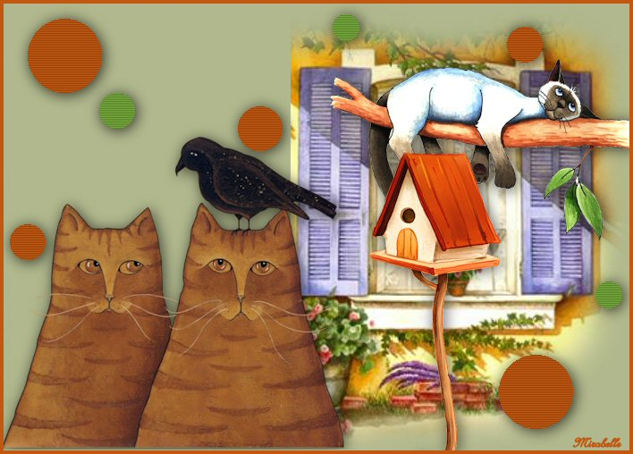 Cours 6 - Chats - bordure
