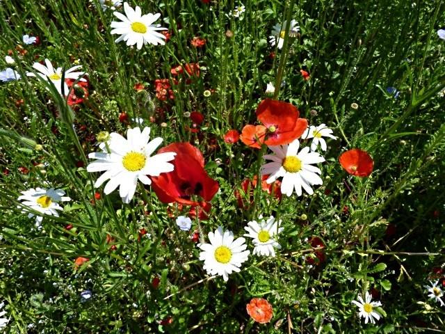 A Metz ville jardin 1 mp1357 2011