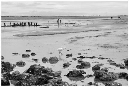 Virée sur Noirmoutier - Février 2016