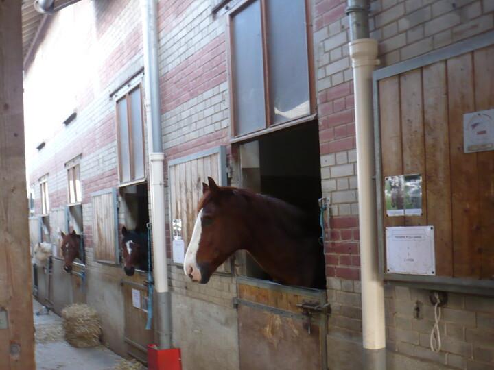 chevaux au haras