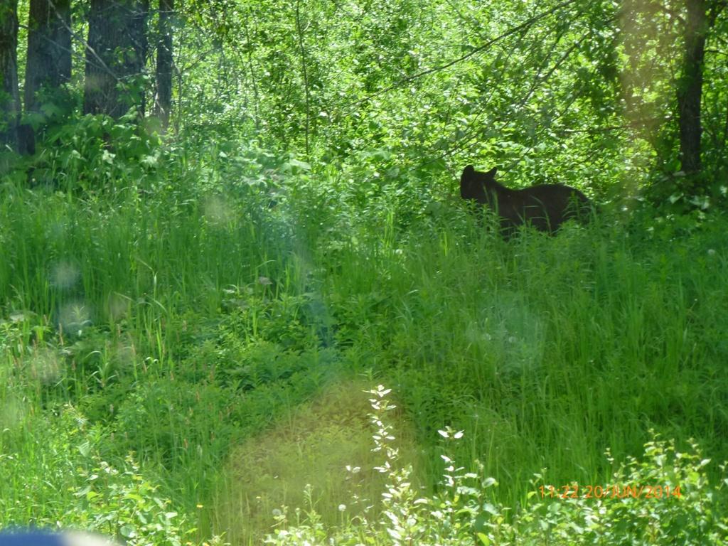 La vie sauvage dans les Rocheuses canadiennes.