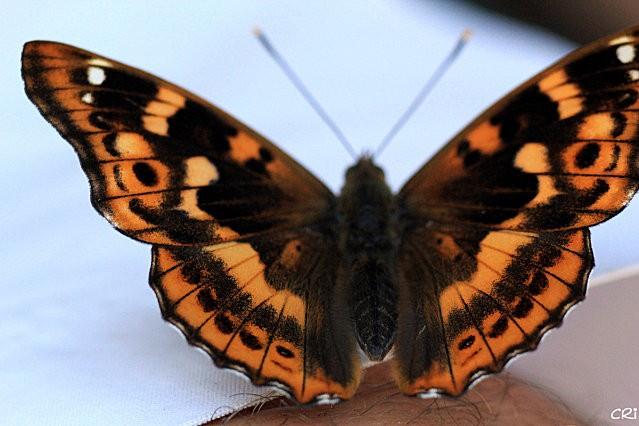 macros-insectes 2857
