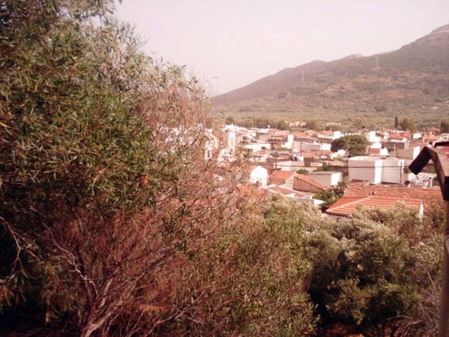 CNOXOS   EN   CRETE   (JUIN  2014)     (4)
