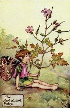 L'Elfe de l'Herbe-à-Robert ...