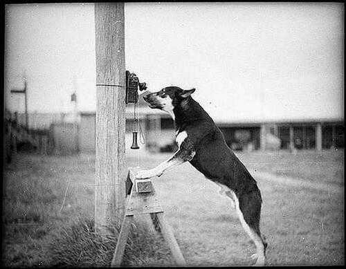 Allo Canin