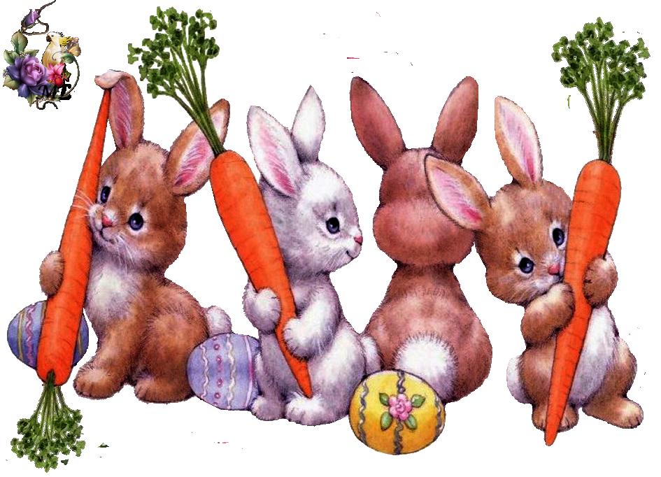 lapins et carottes