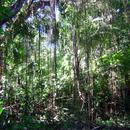 Au bout du parc, une balade dans la forêt tropicale - Photo : Hervé (2003)