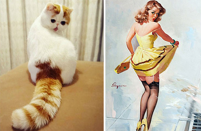 cat-looks-like-other-thing-lookalikes-celebrities-18__700