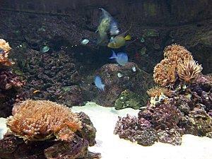 aquarium-torcadero--2-.JPG