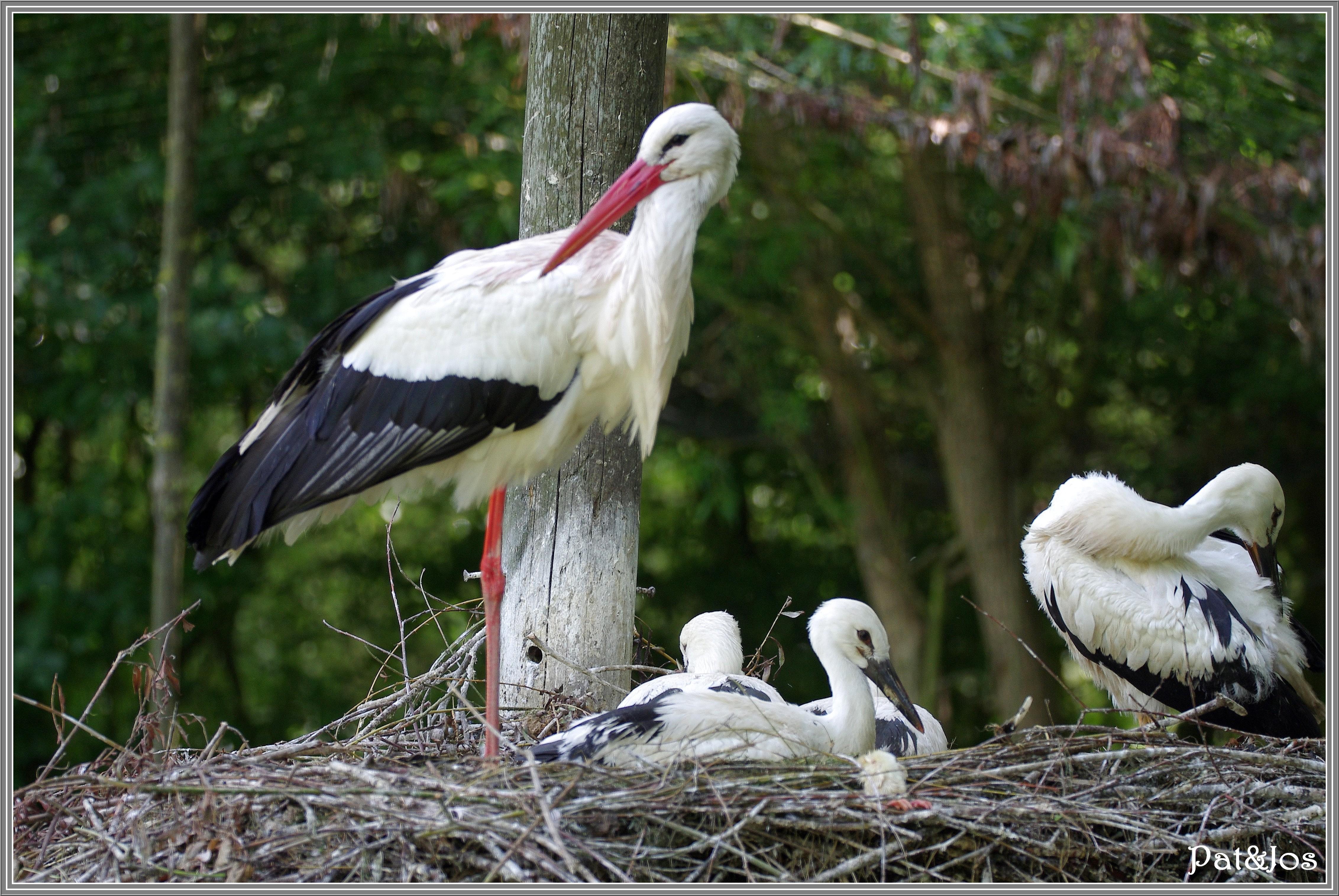 Au coeur du nid nature cuisine for Dans nos coeurs 85