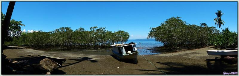 Palétuviers en bord de plage - Puerto Jiménez - Costa Rica
