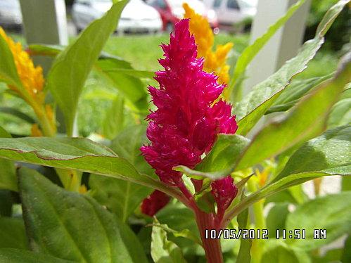 mes-fleurs-008.JPG