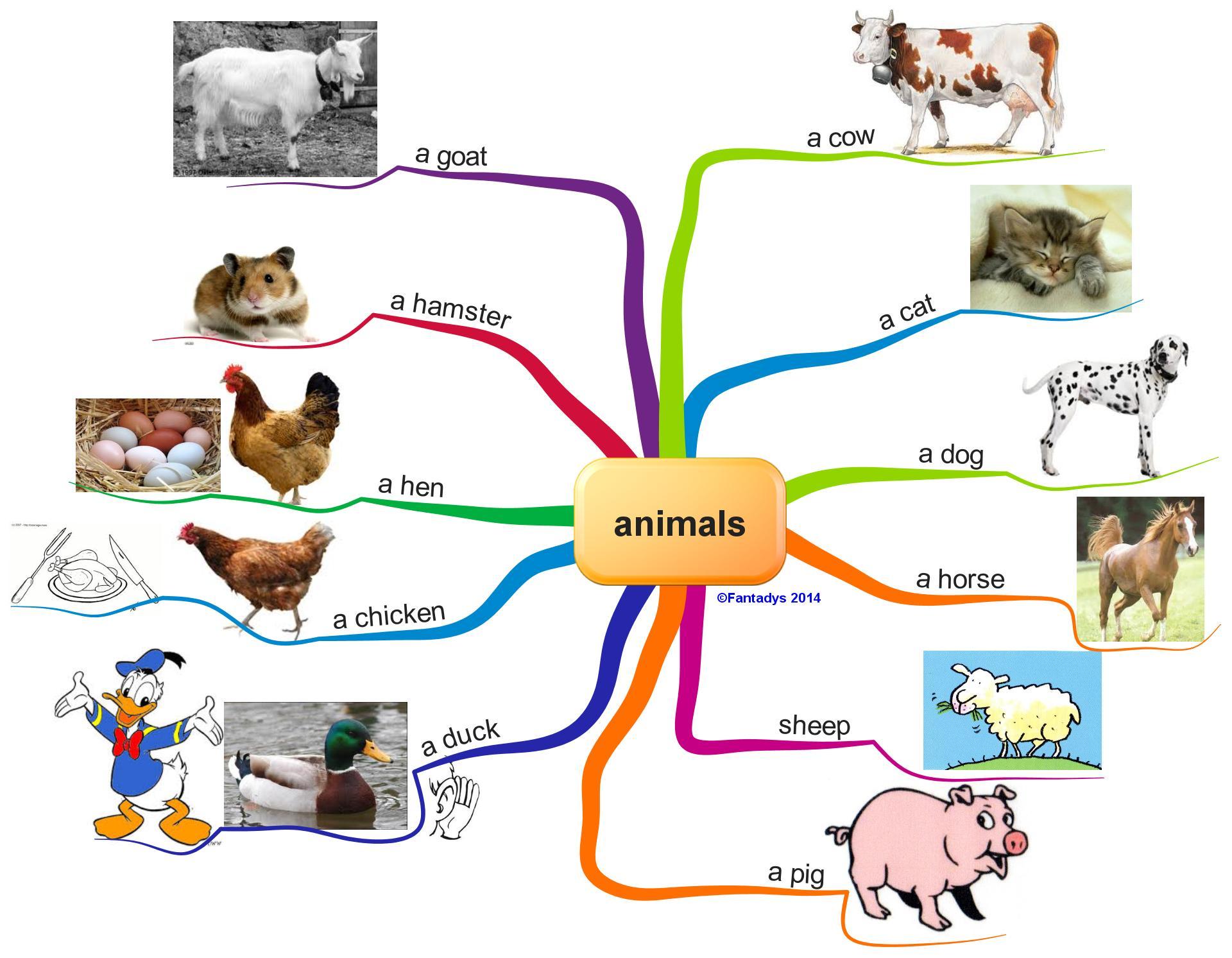 Fabuleux Leçon 16 : Animals - Mon blog de leçons CM1 SL99