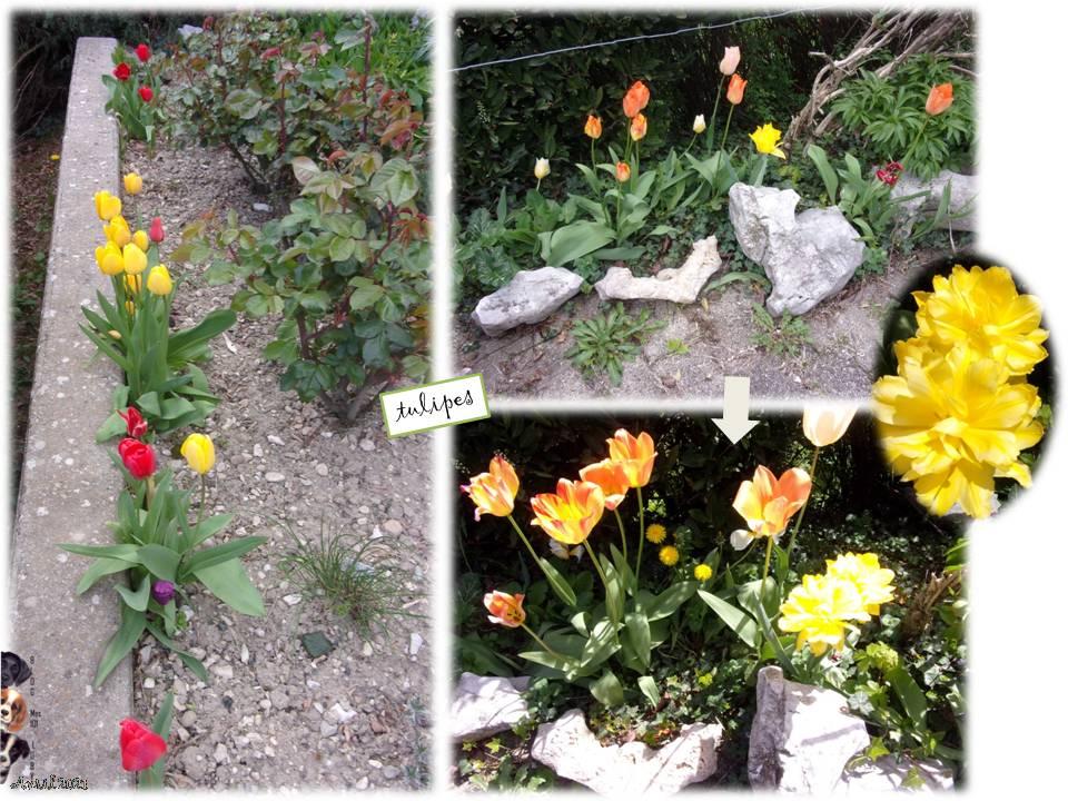 Petit tour au jardin tout fleuri