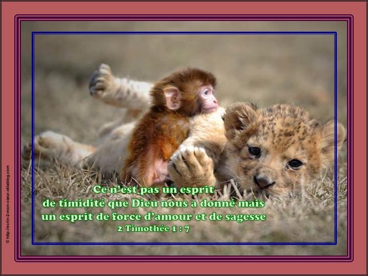 Un esprit de force, d'amour et de sagesse - 2 Timothée 1 : 7