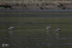 Oiseaux variés 5 (Photos Laurent)