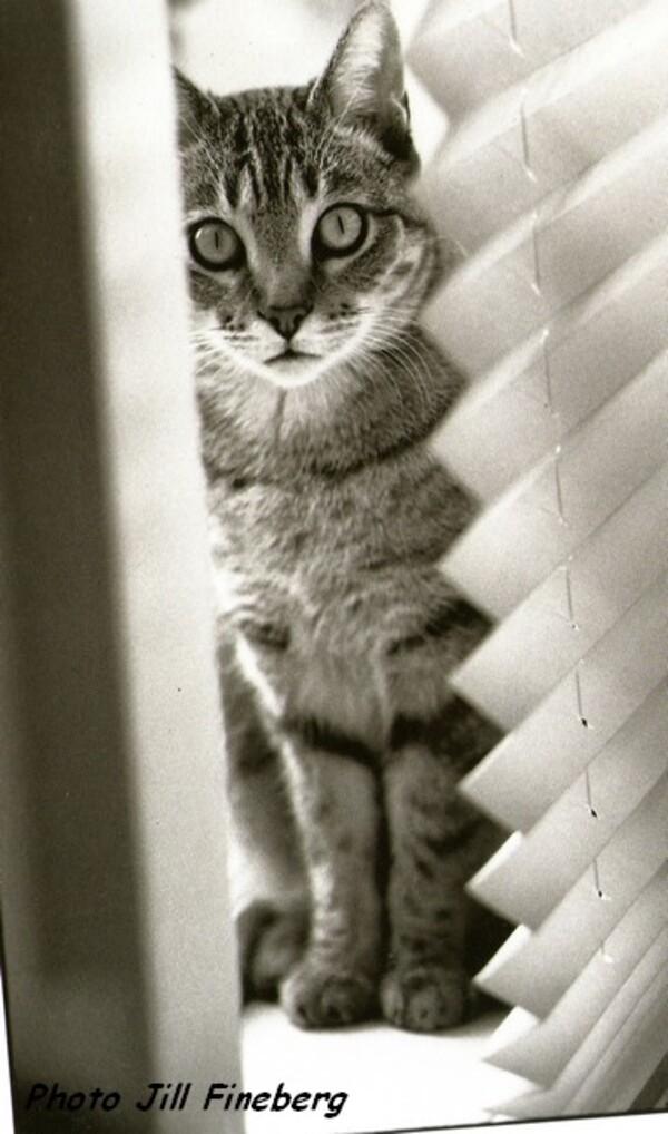 Poemes de maurice carême (Le petit chat noir)