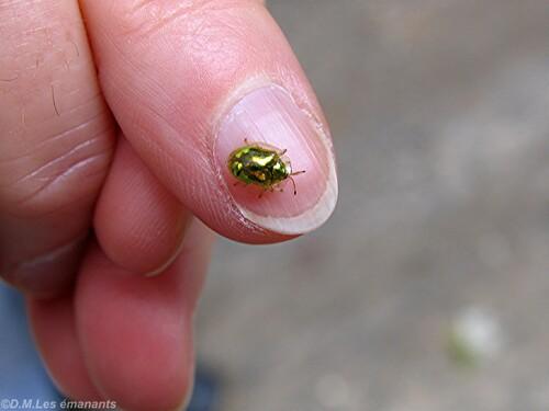Les petits bijoux de la nature
